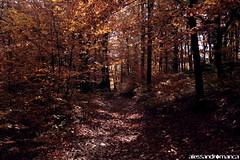 Scream of the wood. (il secondo account di captain_bls) Tags: wood alberi natura slovenia ljubljana gora foresta screamin smarna