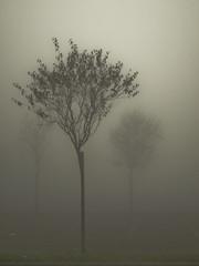 Transcendence (Lumase) Tags: morning autumn trees mist topf25 fog three parkinglot poetry poem ghosts poesia soe transcendence ackerman luisi