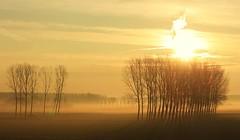 albeggiare (mat56.) Tags: nature alberi nuvole alba sunsets natura campagna cielo aurora sole colori paesaggi lombardia lodi pianura nubi lodigiano padana sennalodigiana mat56 esclamazioni