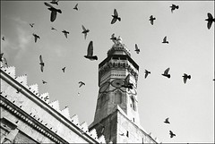 syria #4 (quixotic54) Tags: leica bw film blackwhite fuji pigeons 28mm middleeast rangefinder mosque mount summicron 400 syria neopan mp 28 damascus coolscan asph 9000 xtol fujineopan400  umayyad leicamp  summicronm mmount   autaut nikonsupercoolscan9000ed leicasummicron28mmf20 leicasummicron28mmf20asph