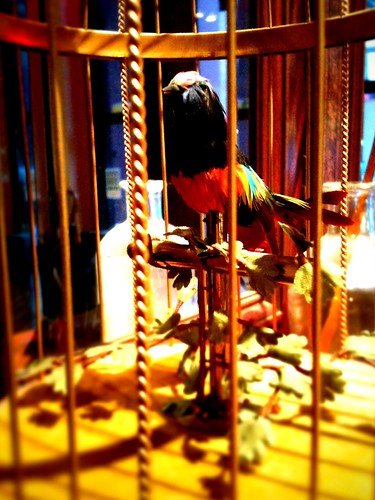 Daily iPhone photos: guilded cage