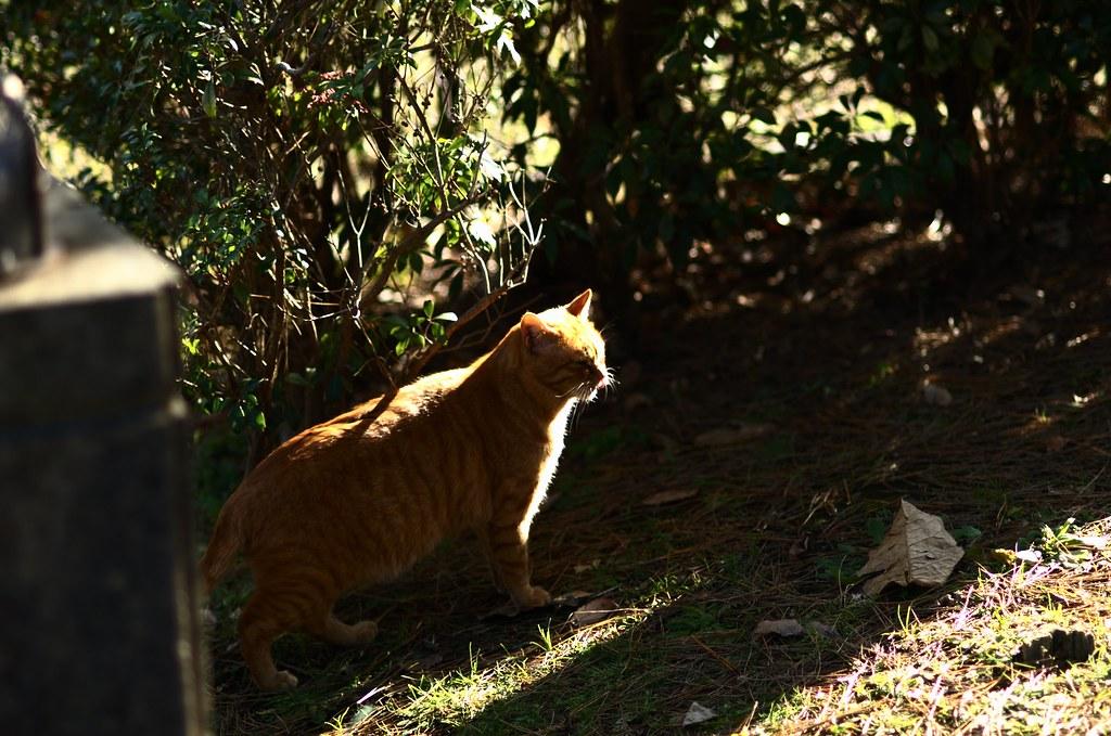 冬の猫達 #7