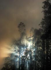 Have They Just Landed?! - Explore #160 28.05.11 (Eyecandi - Rob Hawke) Tags: trees mist fog forest spain nikon nebel aliens explore galicia wald baum hdr spanien pantin galicien d80 naturepoetry nikond80 eyecandi roberthawke robhawke