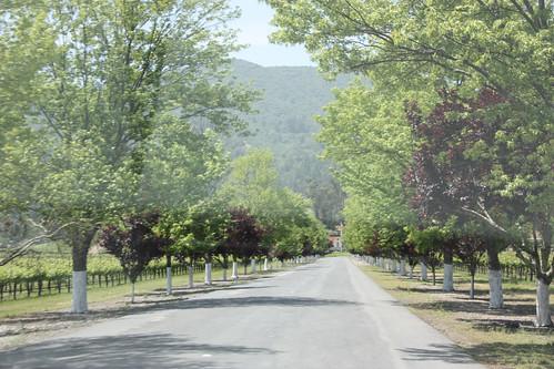 Entering Rubicon Estate