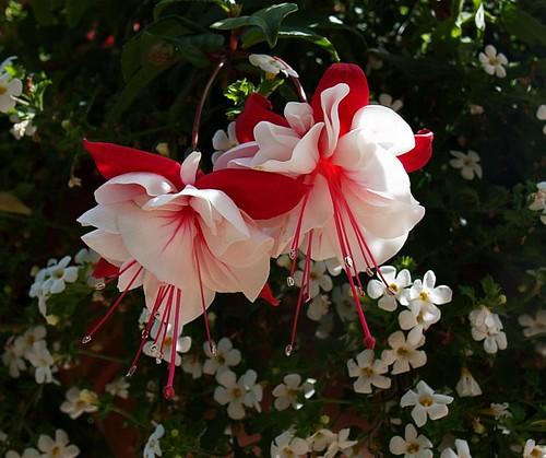 Cveće i romatika - Page 4 3732690770_4ae15f0263