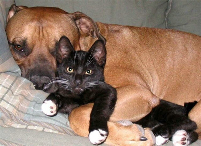 cats&dogs_12