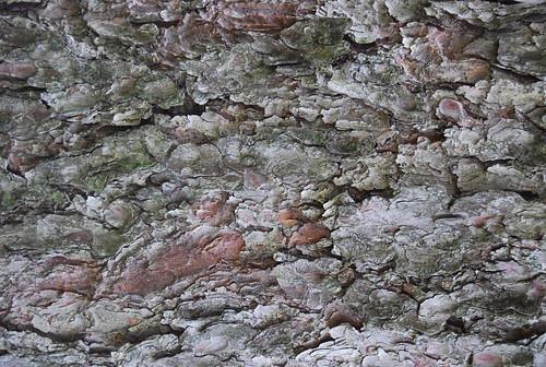 Tree Bark Texture 10