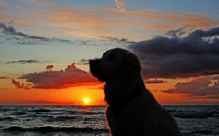 Ditte in the sunset (Ingrid0804) Tags: sunset sea sky dog seascape clouds goldenretriever skyscape denmark silhoutte cloudscapes dogprofile mywinners abigfave odsherred theperfectphotographer explorewinnersoftheworld 100commentgroup virtualjourney saariysqualitypictures saariyqualitypictures