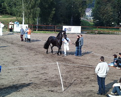 friesen-schau-008 (pischty.hufnagel) Tags: pferd friese www7skyde friesenschau