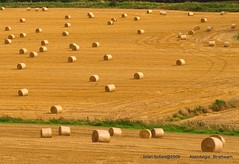 Harvest Time. (B4bees) Tags: autumn beautiful yellow perthshire harvest straw ground august fields bales fabulous rolling harvester combined aclass beautifulphoto bridgeofearn abigfave beautifulscotland theunforgettablepictures olympuse510 unforgettablepictures theperfectphotographer olympuse519 aberdalgie absolutelystunningscapes grouptripod brianforbes earnside couriercountry creativecommonsfrontpage