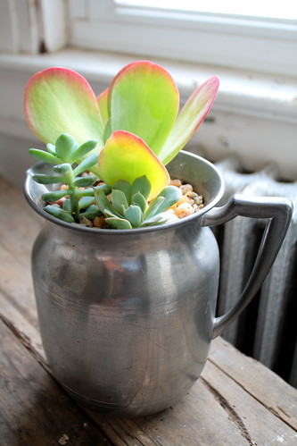 Succulents in pitcher