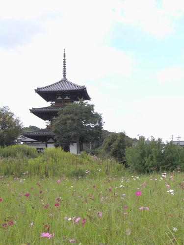 法起寺三重塔とコスモス-03