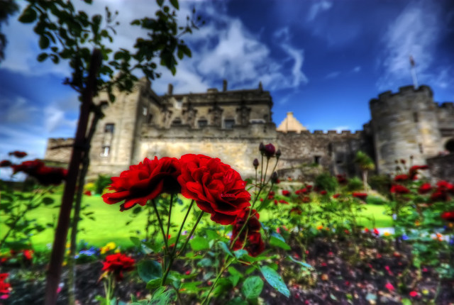 Stirling Castle's Roses
