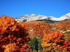 Lone Peak Autumn (janoid) Tags: autumn colors leaves utah october glorious alpine xoxoxo lonepeak xoxoxox youarethebest natureselegantshots xo4u thebestofmimamorsgroups happybirthdayoctoberbirthdaygalhopeitisagoodayforyou ¡unbeso