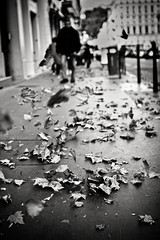 The leaves dance, the men walk (David**T) Tags: street autumn white 3 man david black france fall leaves automne vent leaf dance noir lyon wind air danse explore sidewalk blanc feuilles tang homme danser trottoir feuille explore3