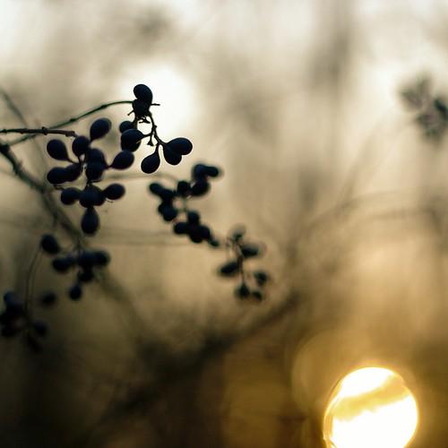 Photowalk 45 - Dark berries