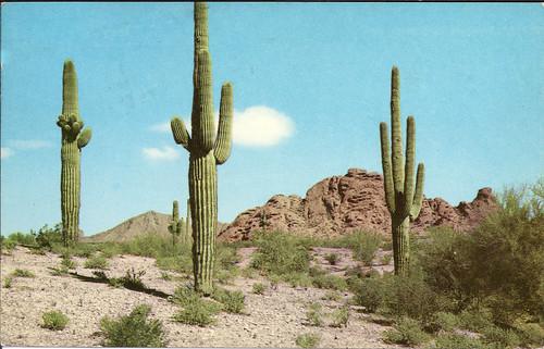 saguaro 1956