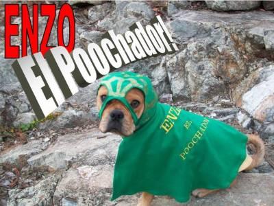 Enzo El Poochador