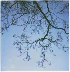 (Leanne Surfleet) Tags: autumn colour film polaroid 600 2009 week46 52weeks nakedtree weelsbywoods leannesurfleet
