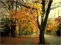 Autumn Colors (micspics444) Tags: road autumn trees colors path topshots worldwidelandscapes natureselegantshots
