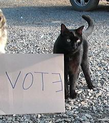 Vote for Angus (rikkis_refuge) Tags: rescue angus joey volunteers contest vincent taco tess vote nacho sanctuary funnyfarm nokill rikkisrefuge catcharity voteforvincent theanimalrescuesitecontest