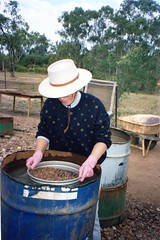 920610 Panning for Sapphires (rona.h) Tags: june australia 1992 cacique ronah