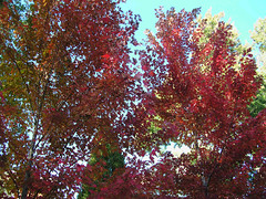 Fall Colors Boulder   DSCN0277