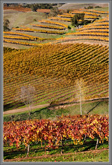 Hanna's Gold (Strange Quark) Tags: california november vineyard vines wine sonoma grape russianriver healdsburg alexandervalley canon24105mml alexandervalleyava alexandervalleyappellation 200911280184