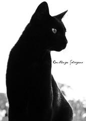 Lejos. (Saggezza) Tags: bw gatos pb preto felinos gatinhos saoleopoldo blackwhitephotos blancoynegrobn