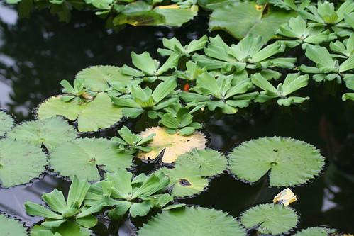 20090919 Edinburgh 20 Royal Botanic Garden 154