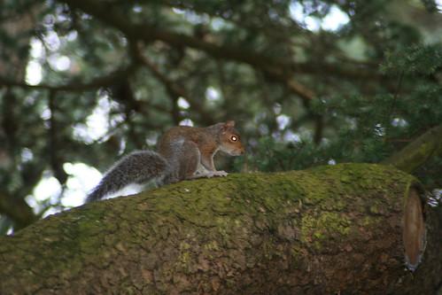 20090919 Edinburgh 20 Royal Botanic Garden 485