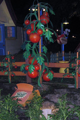 Micky Tomatoes