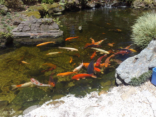 Carp Pond at The Buddha Belly