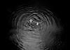 (Gebhart de Koekkoek) Tags: vienna leica bw film water youth blackwhite jump denim float danube m7