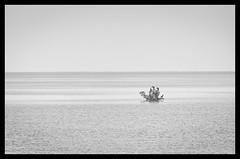 The sea is our home I (Uwe Seiler) Tags: park sea bw birds coral john keys high nikon key state florida cormorant highkey reef corals floridakeys the 2011 thekeys pennekamp johnpennekampcoralreefstatepark d7000 nikond7000