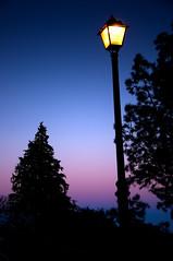 luz entre pinos (- GD photography -) Tags: light sky luz grancanaria nikon farola árboles canarias cielo árbol pinos febrero canaria camaras tejeda cruzdetejeda 2011 d90 luzentrepinos
