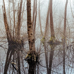 Chobham-Swamp