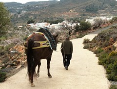 Walking the Horse (CosmoClick) Tags: horse walk mountains sierra sierranevada felix view spain andalusia cosmoclick cosmoclicky