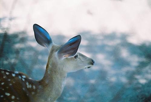 deer by mumujiji