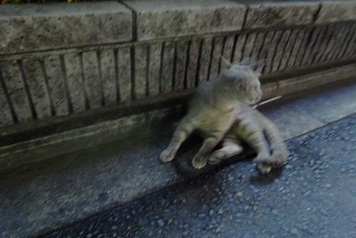 Today's Cat@20090713