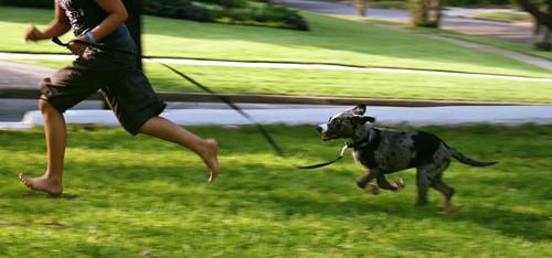 run, salie, run.