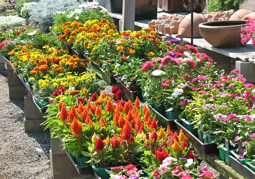 sizziling summer color for flower beds