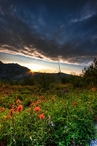 wildflower sunrise