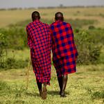 Maasai herdsmen in the savannah - Kenya