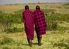 Maasai herdsmen in the savannah - Kenya (Eric Lafforgue) Tags: africa people kenya culture tribal tribes afrika backs tradition massai tribe ethnic masai maasai 804 tribo headdress afrique headwear ethnology headgear tribu eastafrica quénia lafforgue ethnie ethny ケニア quênia كينيا 케냐 кения keňa 肯尼亚 κένυα кенија кенијa
