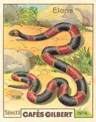 gilbert reptile 1