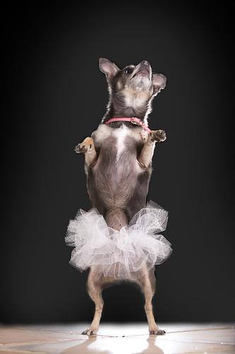 Molly the Ballerina