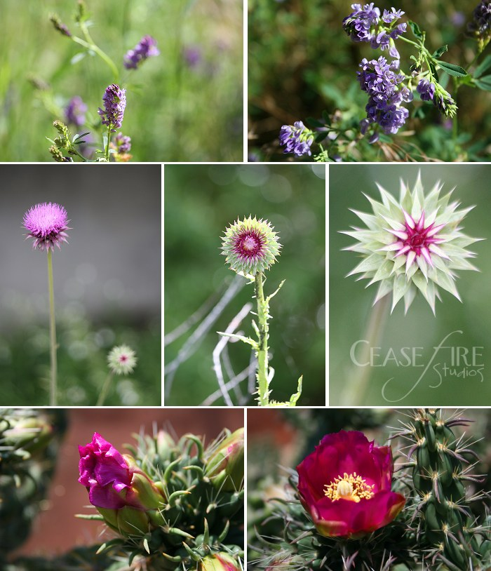 08-06-flowers6