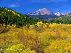 Aspens (pam's pics-) Tags: autumn mountains fall colorado fallfoliage foliage pam finepix s5000 aspens fujifilm rockymountains morris aspen estespark mountmeeker coth fujifilmfinepixs5000 denverpam