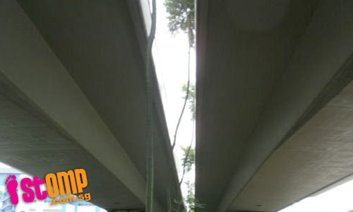 Trees under flyover find a way to grow healthily up to 80m high